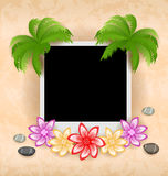 Photo frame with palm, flowers, sea pebbles Royalty Free Stock Photo