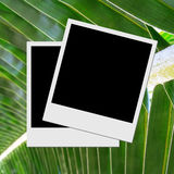 Photo frame on palm leafs Stock Photo