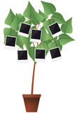 Photo frame plant Stock Images