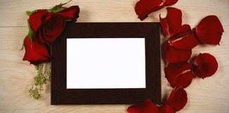Photo frame and rose flower. Empty photo frame and rose flower royalty free stock image