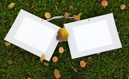 Photo frame standing on the grass with fruit and fig leaf scattering royalty free stock photo