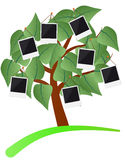 Photo frame tree Stock Photos