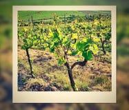 Photo frame with vineyard Stock Photos