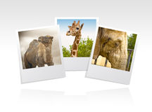 Photo frame zoo Stock Photos