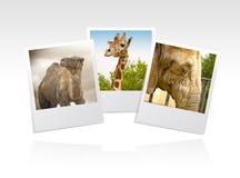 Photo frame zoo stock illustration