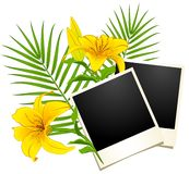Photo frames with flowers Stock Images