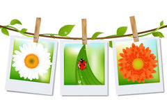 Photo Frames With Nature Image. Vector Royalty Free Stock Photos