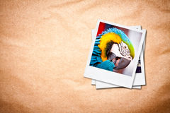 Photo frames on old paper background. Royalty Free Stock Image