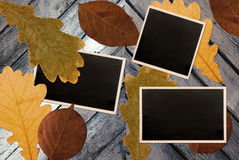 Photo frames over autumn leaves Royalty Free Stock Photos