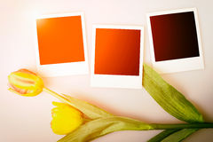 Photo frames on paper background with sun flare and tulips. Royalty Free Stock Photos