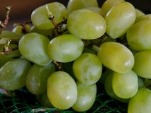 Delicious Green Grapes. Photo of fresh green grapes ready for eating. Juicy and tasty Stock Images