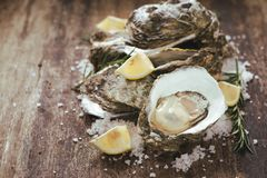 A photo of freshly opened oysters on a wooden background texture. With copyspace Stock Images