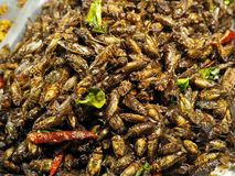 Photo of Fried Crickets at the Market stock image