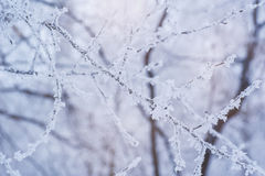 Photo of frozen fir tree background, branches Royalty Free Stock Photos