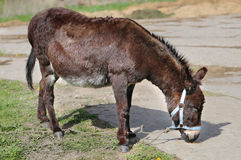Photo funny donkey. Bright picture a funny donkey sunny day Royalty Free Stock Photos