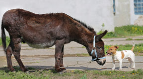 Photo funny donkey and dog Stock Photos