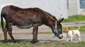 Photo funny donkey and dog Stock Photos