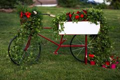 Photo of garden bike decorated with red flowers in garden on summer royalty free stock image
