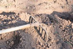Photo Of Garden Rake On Bed Stock Photo