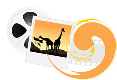 Photo of giraffes and film objects. Isolated on the white background. Illustration Royalty Free Stock Photography