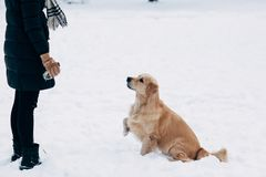 Photo of girl and labrador in winter park for walk. In afternoon Stock Image