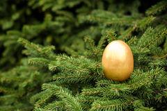 Photo of golden egg on xmas pine tree to represent wealth and lu Stock Image