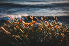 Photo of golden flowers beside body of water Stock Photos
