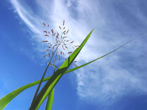 Photo grass, blue sky and clouds. Green grass, blue sky, white clouds Stock Image