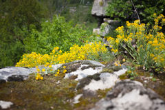 Photo of grass and flowers on high cliff Royalty Free Stock Photography