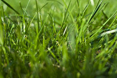 Photo grass, grass background, grass in sunlight,. Part of the meadows, juicy grass, green grass Stock Images