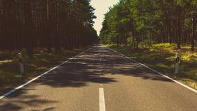Photo of Gray Cement Road in the Middle of the Forest during Day Time Stock Image