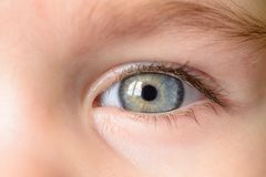 A photo of a gray eye and an eyebrow of a little girl close-up stock images