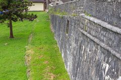 Photo of gray wall and green vegetation Stock Photo