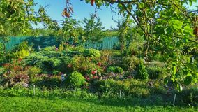Large Flowerbed royalty free stock photo