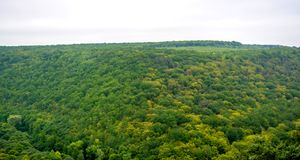 Photo of green forest panorama aerial view in saturated day Royalty Free Stock Image