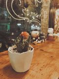 Photo of Green Cactus in a White Pot