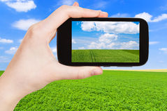 Photo of green country field under blue sky. Travel concept - tourist taking photo of green country field under blue sky with white clouds on mobile gadget Royalty Free Stock Photos