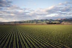 Photo of Green Field Near Mountains royalty free stock photo