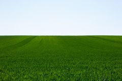 Vibrant green field and cloudless sky royalty free stock photos