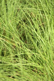 Photo green grass Royalty Free Stock Photography