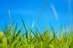 Photo of green grass at summer day on a blue sky background Royalty Free Stock Photos