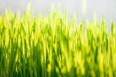 Photo of green grass at sunny day Stock Images