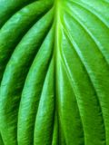 Photo of green leaf flower Stock Image