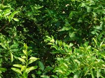 Green leafy plant. A photo of a Green leafy plant Stock Photo
