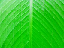 Photo Green Leaves. Royalty Free Stock Image