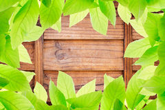Photo of Green leaves on wood block wall texture Royalty Free Stock Photography