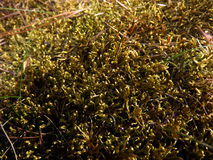 Photo of the green moss close up. The photo of the green moss close up Stock Photo