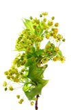 Photo of green plant Stock Images