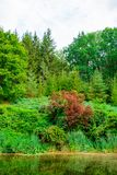 Photo of green tree near the lake in a park at summer royalty free stock photo