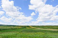 Photo of green wheat, corn and sunflower fields with blue sky Royalty Free Stock Image